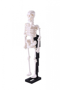 Nanoblock - Human Skeleton (Level 5)